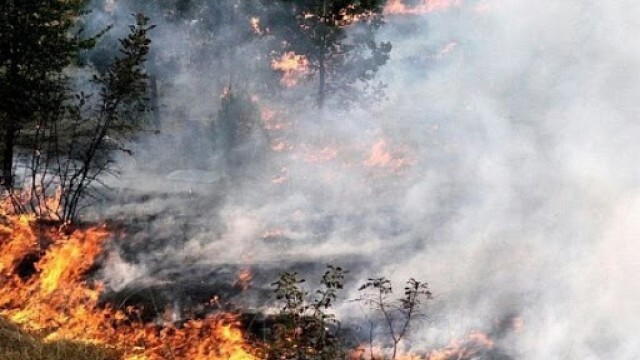 13 пожара през уикенда - спасени орехи край Срацимир