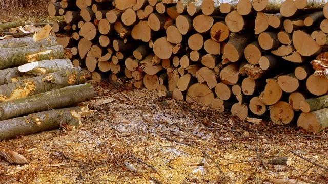 Зачестяват кражбите на дървен материал, в Сеново задържаха двама с натоварени каруци
