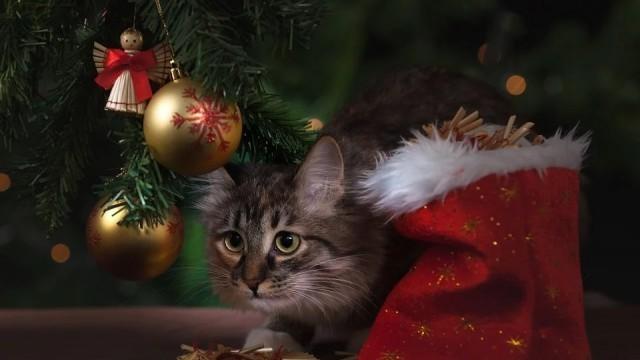 Ето по колко дни ще почиваме на Коледа и Нова година