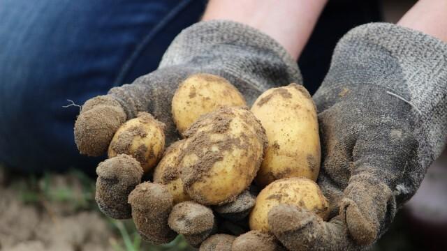 ДДС лавина: Земеделците искат диференцирана ставка за плодове и зеленчуци