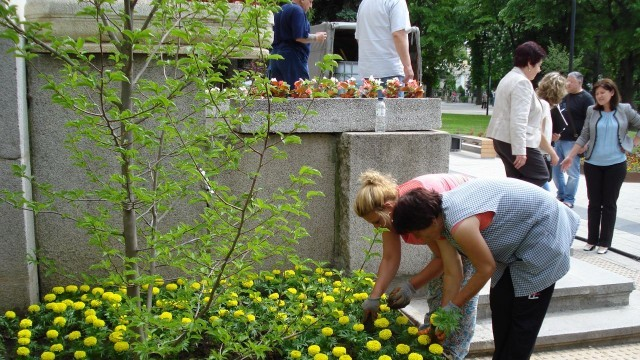 1000 петунии и тагетес оцветиха площада в Плевен