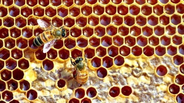 За пръв път ще се финансира подвижното пчеларство в България