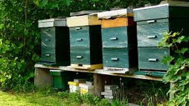 Плевен е сред областите с най-много проектни предложения по Националната програма по пчеларство