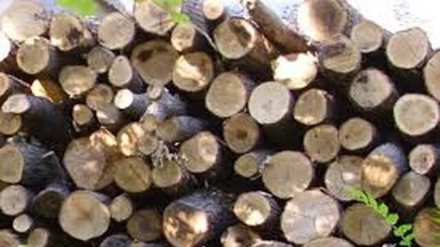 Спипаха бракониер с близо 5 кубика незаконна дървесина