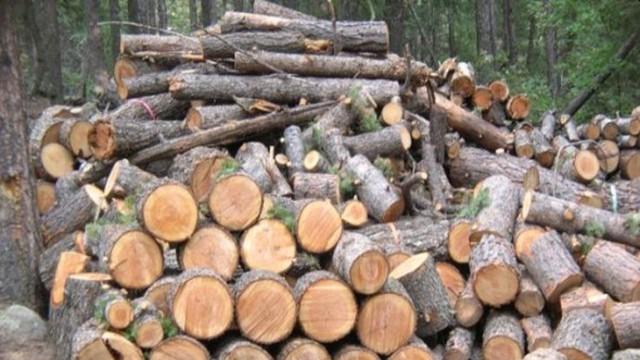 Хванаха крадец на дърва в землището на Долни Дъбник