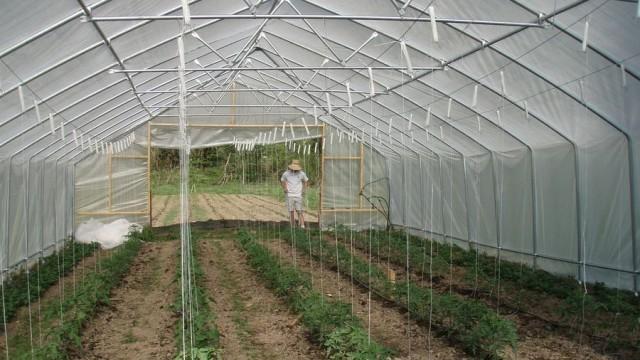 От днес започва приемът на документи за помощ на оранжерийните производители