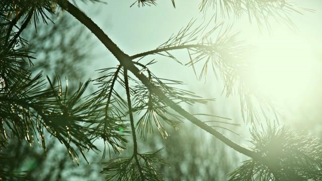 Във вторник ни очакват температури до 12 градуса