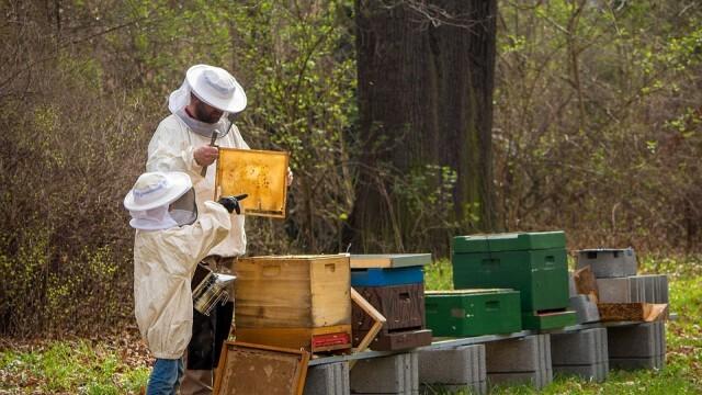Животновъдите и пчеларите могат да кандидатстват за финансово подпомагане по de minimis