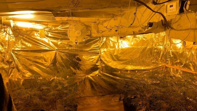 Русенски полицаи разкриха оранжерия за отгреждане на марихуана в Силистренско