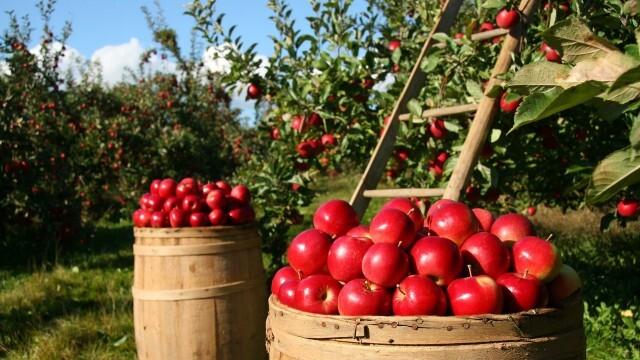 4 причини да се храните с местни плодове и зеленчуци
