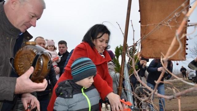 Министър Танева заряза лозите в Нисово, обяви какво предстои за производителите