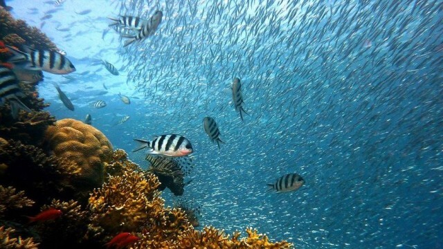 8 юни - Световен ден на океаните