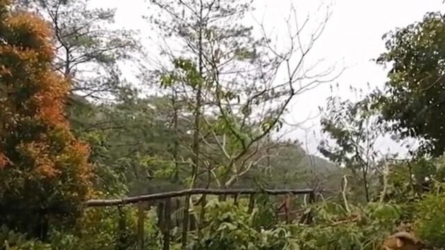 Най-малко 9 жертви и 11 в неизвестност след тайфун, преминал през Филипините