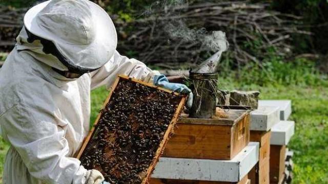 В деня на Св. Харалампи празнуват пчеларите