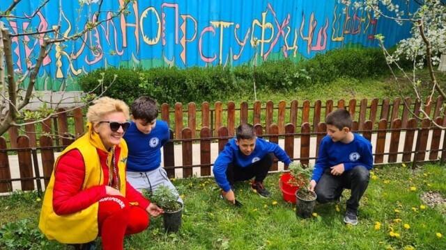 Деца от Плевен разкрасиха с бели рози двора на училището си