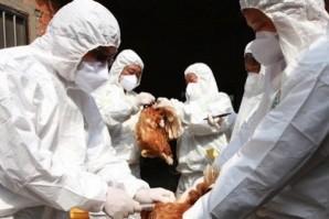 Птичи грип в бургаско село, извънредни мерки в цялата страна