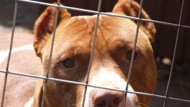 Баща на две деца системно изнасилвал куче