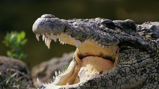 Гладни крокодили ще охраняват затворници в Индонезия