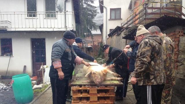 Ловеч: С първия студ и сняг паднаха и първите коледни прасета